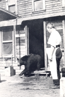 A young black bear makes a hasty exit from a house in the town of Jasper, ca. 1920.