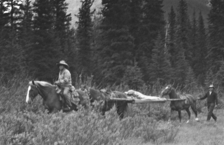 Park Warden Ed McDonald is carried out of the backcountry on a stretcher between two horses after sustaining a broken pelvis when his horse, spooked by a grizzly, bucked him off, 1937.