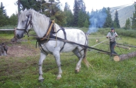 Park Warden Patti Walker skids firewood at Little Heaven warden cabin with her horse, Oyster. Skidding wood with a horse and harness, much like many tasks performed by backcountry wardens, evokes simpler times and age-old traditions.